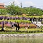 尾張旭市の画像